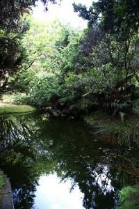 Jardim Botânico do Faial
